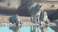Madikwe Webcam