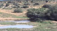 Africa Live Waterhole Webcam